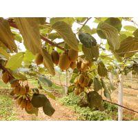 水源情R,有机猕猴桃,100%的口感,尽在河南水源地农业科技有限公司