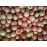 大量供应辽宁凌海西红柿 果型好,口感极佳,色泽艳丽