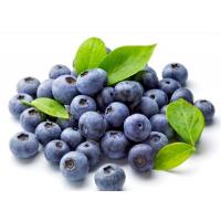 蓝莓苗基地_扬州蓝莓苗_仁源农业科技(在线咨询)