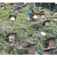 什么时间吃蜂蜜美容,蜂蜜好喝么有什么功效蜂蜜是什么?