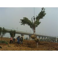 河南园林绿化一级资质|郑州园林绿化一级资质|河南园林一级资质、郑州园林一级资质、河南绿化一级资质