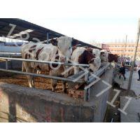 小牛犊养殖基地规模养殖小牛纯利润
