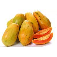 木瓜提取物 甘肃大量现货 纯天然 厂家直销 现货包邮