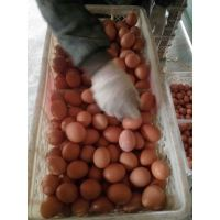 专供饲料厂用蛋鸡饲料添加剂壳红素,改善蛋壳颜色变红变深