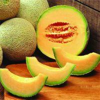 供应供应大量哈密瓜黄丝玉 新疆特产哈密瓜 供应采购代理哈密瓜