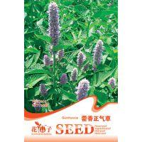可混批 炫酷表情花种子 创意园艺花卉花籽 藿香正气草种子