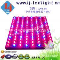 LED 55W 中功率 植物灯 红蓝 室内水培生菜生长 补光灯 厂家直销