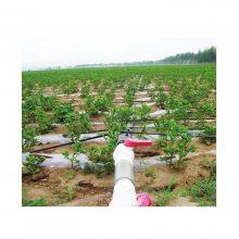 土豆膜下滴灌带 土豆膜下滴灌技术 土豆膜下滴灌施肥造价