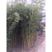 上海哪里能买到竹子