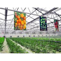 徐州恒瑞温室工程厂家直销日光温室玻璃温室建设