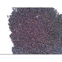 供应优质腊梅种子 腊梅种子 多少钱一斤