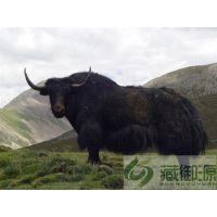 藏御源(图)|若尔盖牦牛肉礼盒|牦牛肉礼盒