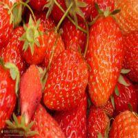 红颜草莓苗,能给邮寄的公司,丰香草莓苗