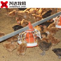 江苏徐州肉鸡料线自动化养鸡设备 土鸡养鸡专用设备肉鸡自动喂料线