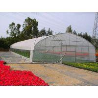 薄膜温室塑料大棚造价多少钱?—青州瀚洋温室工程