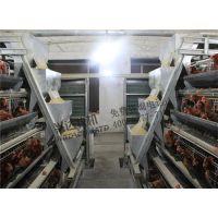 兴达农牧(图)_自动捡蛋机厂家_凌海市自动捡蛋机