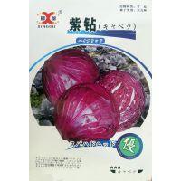 蔬菜种子 紫钻 圆球紫甘蓝 紫包菜 紫圆白菜 紫卷心菜香脆 5克/包