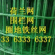 绿色养殖铁丝网 养鸡果园专用铁丝网 浸塑荷兰网 现货厂家销售多钱一米