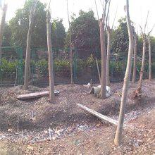 园林护栏网 公园隔离网 旺来绿化带防护围网