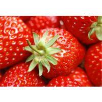 宁波红颜草莓苗,仁源农业科技,红颜草莓苗价格