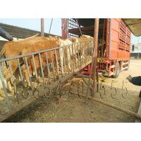 南昌哪里有牛犊买≈小牛价格≈≈≈≈≈≈[下和四肢内侧毛色浅淡。俗称]