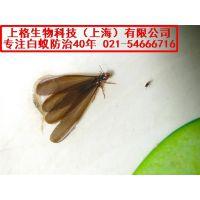 餐厅杀老鼠|灭鼠药品|上海浦东灭鼠公司
