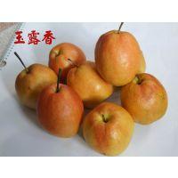 玉露香梨树苗 新品种梨树苗厂家直销 梨树苗价格低