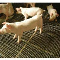 双晟山东猪床专用镀锌铁丝轧花网生产厂家