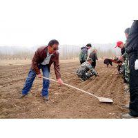 秋季大蒜种子供应批发厂家金农丰源