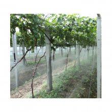 山区猕猴桃果园吊挂式喷灌 倒挂式喷灌 悬挂式喷灌系统