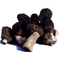 青海羊肚菌种植,青海羊肚菌种植产地,青海羊肚菌种植效益