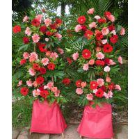情人节临近,深圳宝安鲜花市场的价格行情导致开业花篮涨价