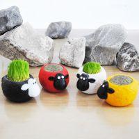 [清仓处理]迷你盆栽—肖恩羊草娃娃 新奇特地摊DIY种植桌面小花园
