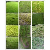 蒂朵高端工艺仿真草皮墙面青苔装饰干花 多肉植物相框盆景微景观草皮植物配件