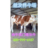 养牛一年的纯利润是多少钱