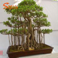 人造仿真盆景松树 迎客松盆景 假罗汉松盆栽批发厂家 广东仿真松树定做