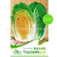 黄金大白菜种子 胶菜 家庭种菜 阳台蔬菜盆栽 植物种子 一袋20粒