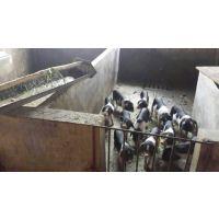 宁乡花猪 优质土花猪养殖场 土花猪肉价格优惠 雌雄统货