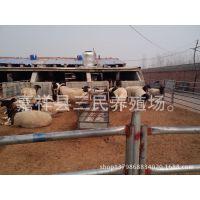 山东省山羊场,山东东营超群杜泊绵羊养殖场【种羊出售】