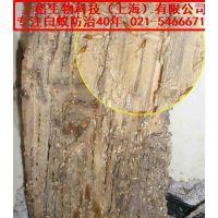 上海虹口区白蚁防治站|上海白蚁药|有翅膀的白蚂蚁图片