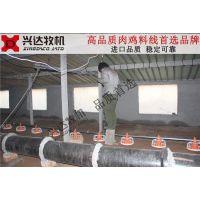 广东肉鸡料线 养鸡料线 自动喂料机 平养设备 兴达牧机品质
