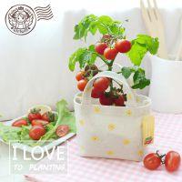 麻袋创意可爱DIY栽培奇趣植物办公室桌面室内迷你小盆栽植物批发