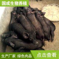 养殖农家土猪散养生态黑香猪黑土猪绿色无污染放养黑猪