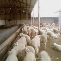 肉羊养殖技术 提供肉羊技术资料光盘 肉用羊价格 种羊 成品羊回收