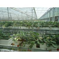 供应甘肃山东德州豪达瑞科科研温室 观光采摘温室生态餐厅温室造价 温室大棚造价