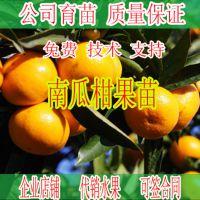 武鸣哪里有南瓜橘果树苗卖