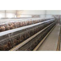 江苏裕丰禽业厂家直销优质60-90日龄青年鸡,海兰褐品种蛋鸡,1日龄鸡苗,欢迎订购