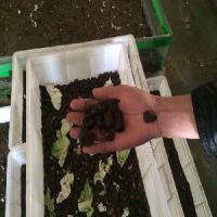 怎么选择***好的特种养殖,具有口碑的土元养殖方法市场价格情况