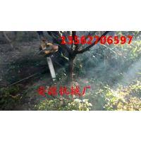 高枝油锯 高位树枝修枝锯 高枝剪,花具,安源修枝剪