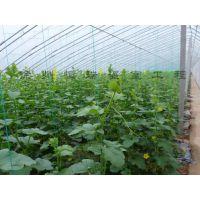 萧县的温室大棚都是哪个公司搭建的?